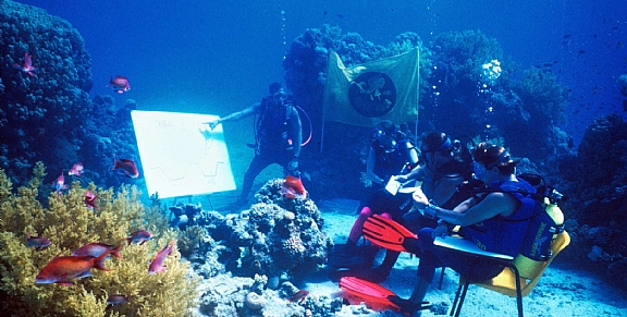 Learn to Dive: Red Sea
